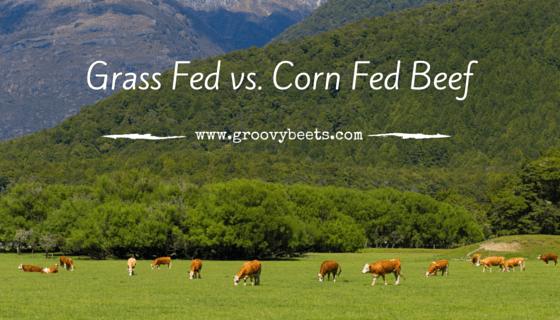Grass Fed Beef vs. Corn Fed Beef