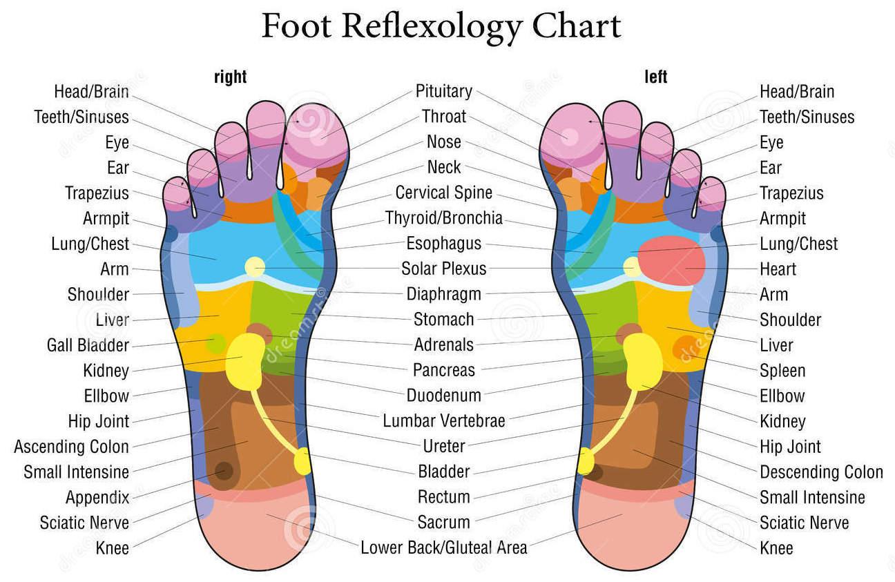 Foot Reflexology Chart | GroovyBeets.com