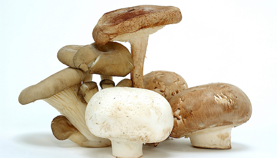 Mushrooms and Cancer | LeannForst.com