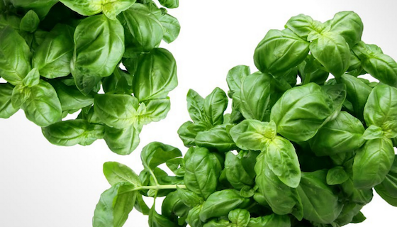 Benefits of Basil Essential Oil | LeannForst.com