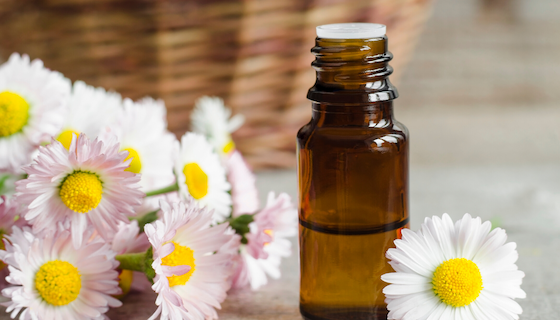 6 Benefits of Roman Chamomile Essential Oil