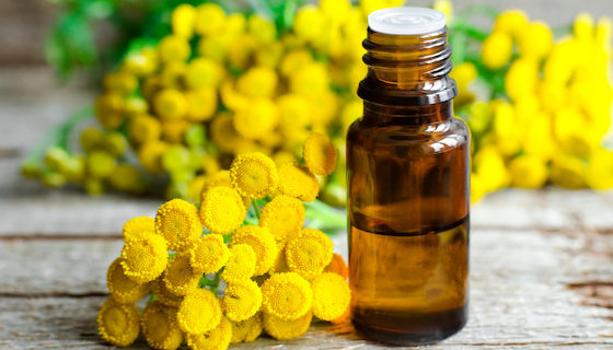 Benefits of Blue Tansy Essential Oil